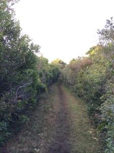 A beautiful Nantucket walking trail.