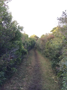 A beautiful Nantucket walking trail.